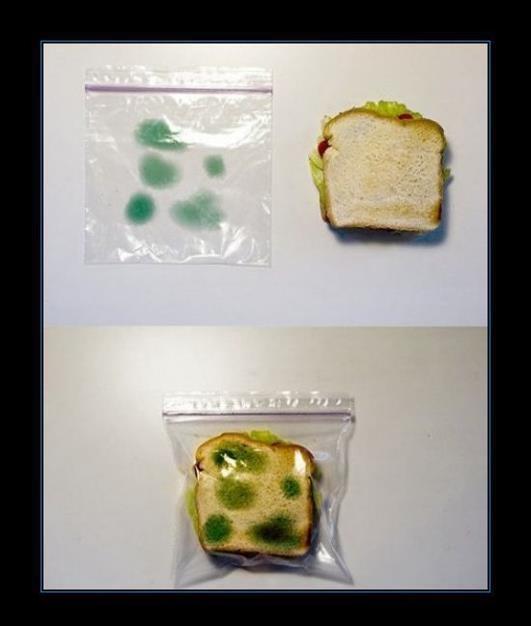 sistema anti robo ni lo tocaran bolsa para sandwich con manchas verdes hongos echado a perder