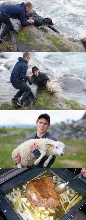 2 muchachos jovenes rescatando a una oveja borrego barbacoa