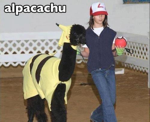 alpacachu alpaca disfrazada de pikachu ahs ketchum cosplay