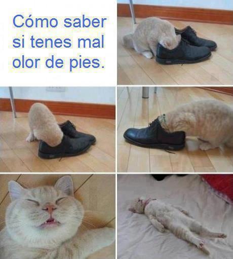 como saber si tienes mal olor de pies gatito zapato