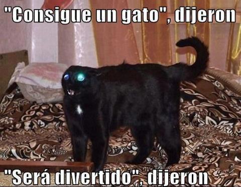 consigue un gato dijeron sera divertido dijeron gatito negro loco enojado