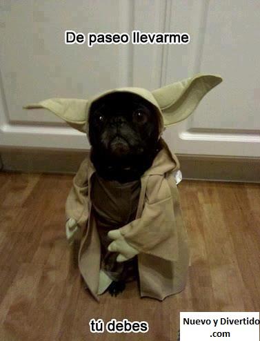 de paseo llevarme tu debes perro disfrazado de yoda de star wars chistoso
