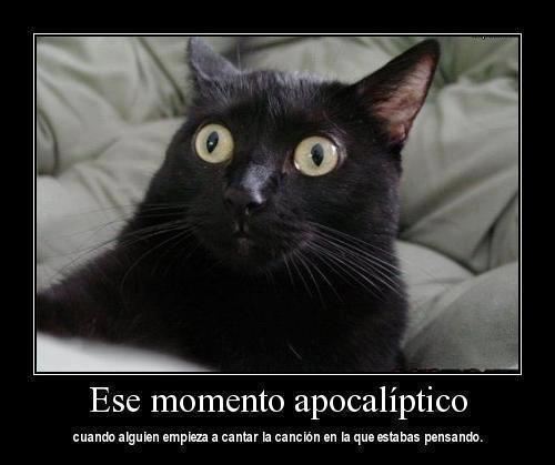 esta es tu cara cuando alguien comienza a cantar la cancion en la que estabas pensando gato sorprendido