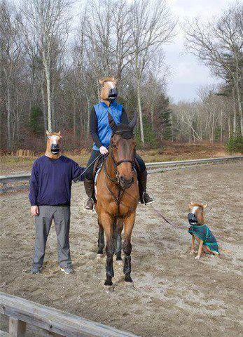 familia de caballos con mascaras de caballo perro