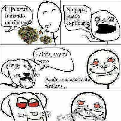 hijo estas fumando marihuana no soy tu perro me asustaste firulays