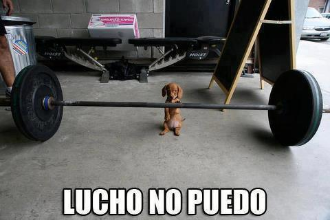 lucho no puedo perrito levantando pesas