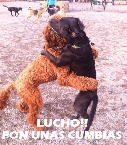 lucho pon unas cumbias perros bailando abrazandose
