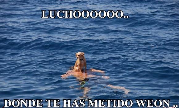 luchoo donde te has metido weon perro en el mar nadando hombre abajo