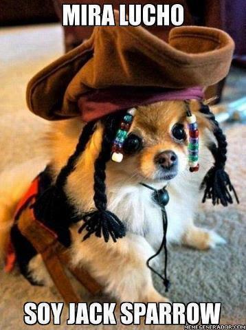 mira lucho soy jack sparrow perro disfrazado de pirata bonito