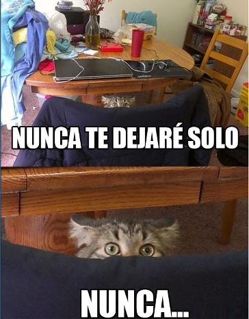 nunca te dejare solo... nunca gato gatito