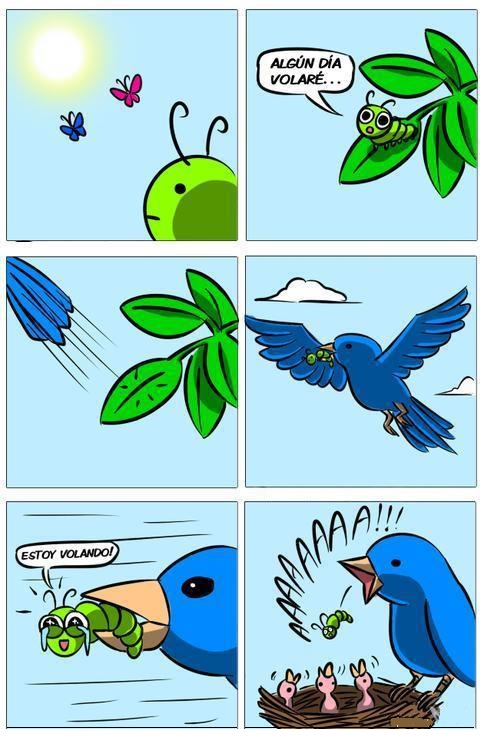 oruga mariposa algunn dia volare comida de pajaros