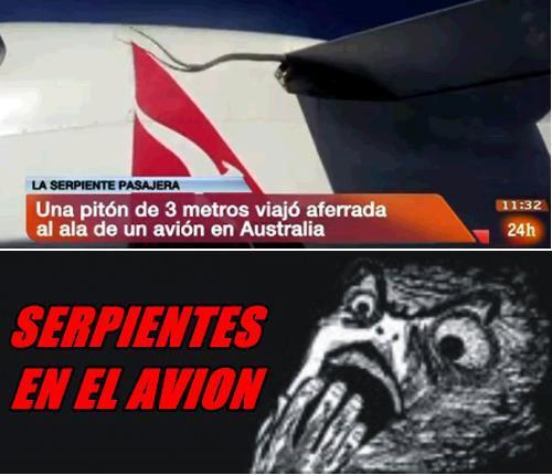 serpientes en el avion memes un piton de 3 metros viajo aferrada al ala de un avion