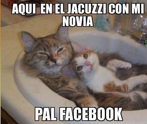 aqui en el jacuzzi con mi novia pal face gatos gatitos