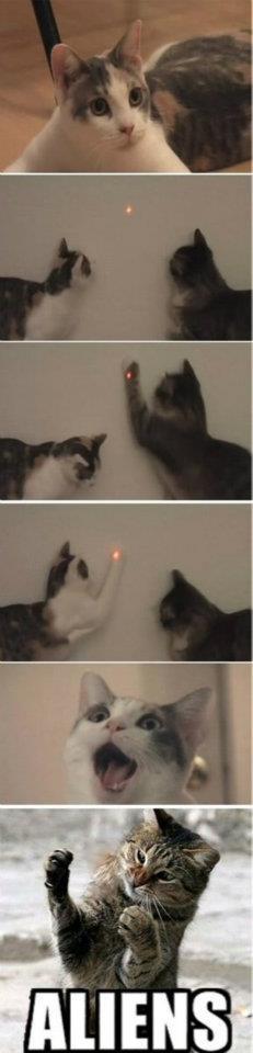 gatitos tratando de atrapar el punto rojo laser aliens gato
