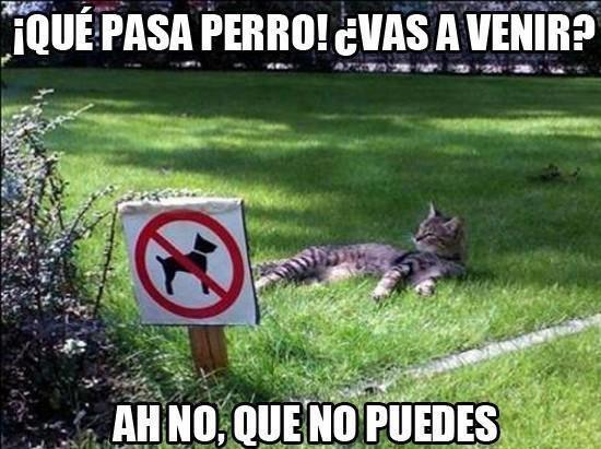 gato en el pasto que pasa perro vas a venir ah no que no puedes