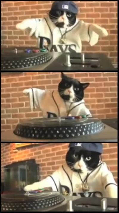 gato gatito chistoso cholo rapero dj 50 cent
