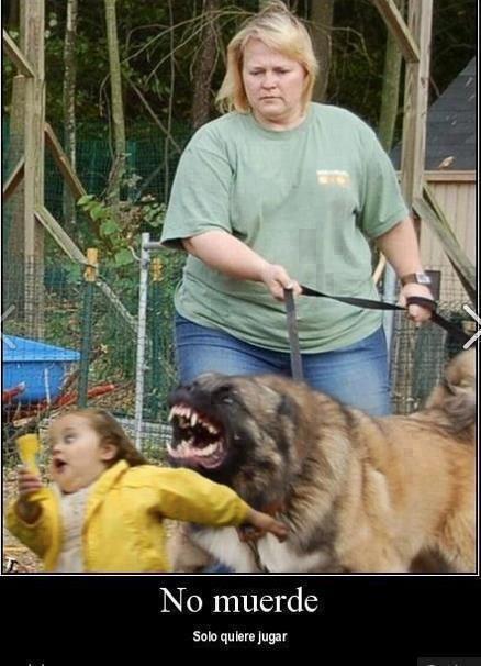 no muerde solo quiere jugar perro agresivo malo