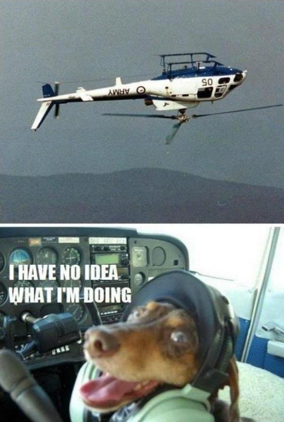 no tengo idea de lo que estoy haciendo perro perrito manejando piloteando helicoptero