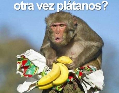 otra vez platanos regalo mono chango changuito cara chistosa