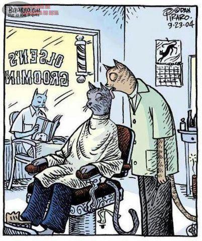 peluqueria estetica para gatos acicalar chistosos