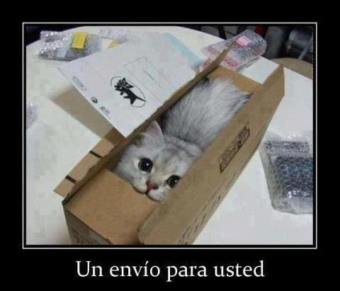 un envio para usted gatito gato empaquetado jugando en caja