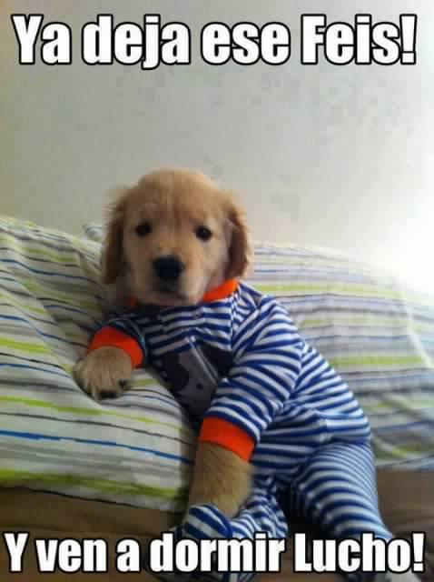 ya deja ese feis facebook y ven a dormir lucho perro bonito