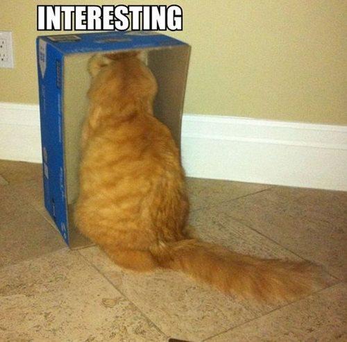 eso es interesante gato dentro de una caja viendo algo