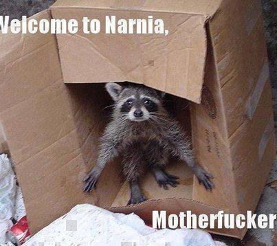 b welcome to narnia mapache dentro de una caja fotos graciosas