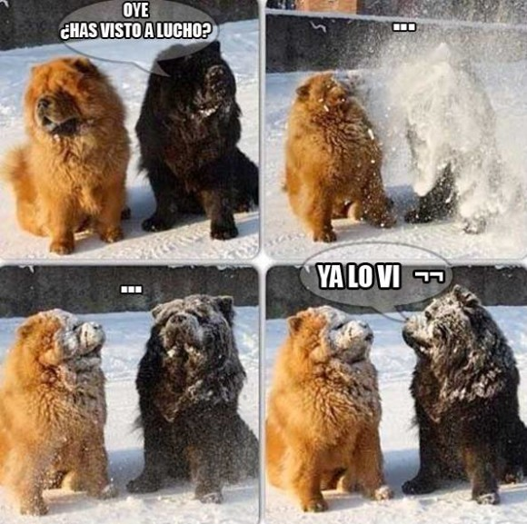 oye has visto a lucho ya lo vi bola de nieve en la cara