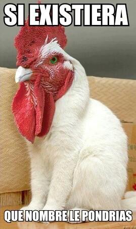 si existiera que nombre le pondrias gato con gallo